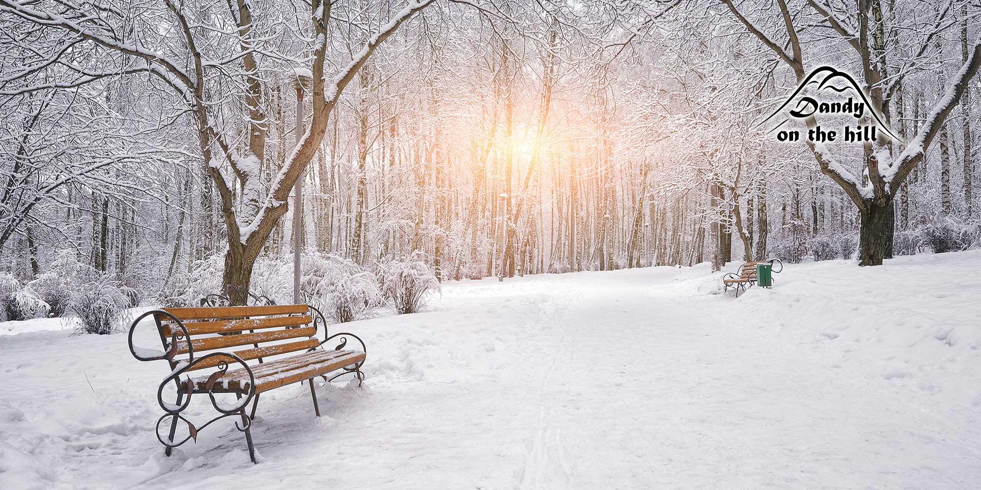 winter-dandy